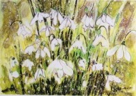 elaine nash snowdrops at babworth 050218